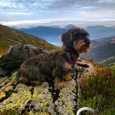 Getting Back To Nature by Jennifer Manteca. #Teckel #Dog #Dachshund