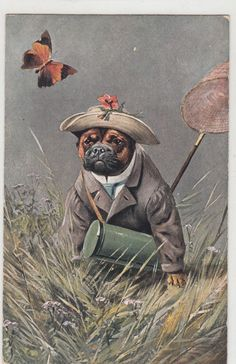 Want some fun buddies pug pugs puglia puggle puggy dog little pug out catching butterflies c 1910s 1920s thecheapjerseys Choice Image