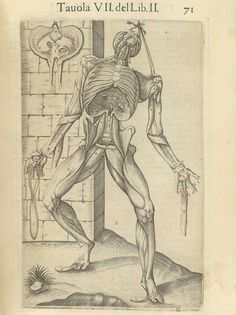 Page 71 of Juan Valverde de Amusco's Anatomia del corpo humano, 1560 featuring a flayed cadaver hanging by a rope tied around its head and left shoulder with the rib cage exposed. From the collection of the National Library of Medicine. Visit: http://www.nlm.nih.gov/exhibition/historicalanatomies/valverde_home.html