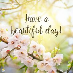Good morning image with spring flowers. Happy Good Morning Quotes, Beautiful Morning Messages, Good Morning Cards, Good Morning Beautiful Images, Happy Morning, Morning Inspirational Quotes, Good Morning Picture, Good Morning Flowers, Good Morning Messages