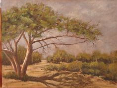 Acacia tree by Hannes Scholtz