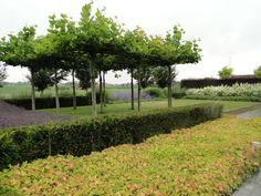 Pergola With Glass Roof Lush Garden, Shade Garden, Outdoor Art, Outdoor Gardens, Landscape Architecture, Landscape Design, Contemporary Garden Design, Classic Garden, Garden Spaces