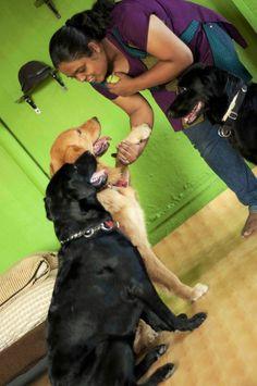 A Positive Reinforcement Dog Trainer: