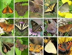Butterfly Garden Flowers & Plants by Region (This is a Fantastic free tool for attracting Butterflies to Your Garden. )