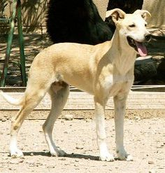 *Animals&Veterinary Misc* on Pinterest | 94 Pins