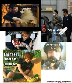 Meme Center | allkpop  Think it's best not to let onew to have a pet cause he might cause a mess.