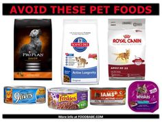 Are You Feeding Your Pets Roadkill, Carcinogens & Moldy Grains? (See The Best and Worst Pet Food) BLAH!! #MyVeganJournal