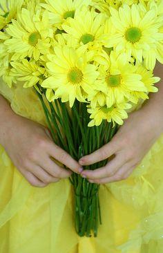 Beautiful yellow Daises ❤️