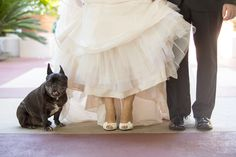 Want Your Dog at Your Wedding? Tips, ideas and suggestions! Elizabeth Victoria Photography