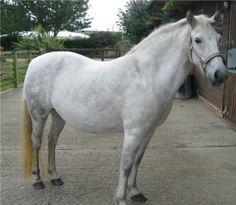 Eriskey pony
