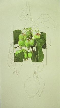 Color Pencil Drawing Ideas Apples Squared - S J Morris. Contour drawing with selected area in full color showing form and light and texture. Doodle Drawing, Ap Drawing, Painting & Drawing, Contour Drawing, Color Contour, Nature Drawing, Drawing Projects, Art Projects, Drawing Ideas