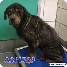 3 5 2016 still there !! Keep sharing! 02/28/16-New York, NY - Rottweiler. Meet Athena, a dog for adoption. http://www.adoptapet.com/pet/14981541-new-york-new-york-rottweiler