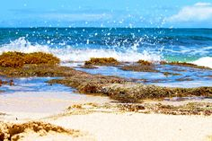 Tide Pools by Turtle Bay SEIS, via Flickr Turtle Bay Resort, North Shore Oahu, Tide Pools, Waves, Mountains, Painting, Outdoor, Outdoors, Painting Art