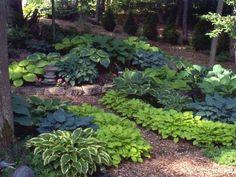 Variety - Blue, Green, And Gold Hostas. Larger to Smaller Shade Garden Plants, Hosta Plants, Shade Perennials, Blue Hosta, Hosta Varieties, Beautiful Landscapes, Beautiful Gardens, Garden Photos, Garden Planning