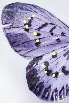 violet butterfly wing