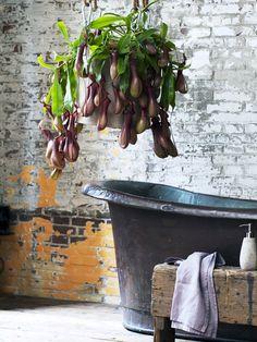 Vleesetende planten Mooiwatplantendoen.nl
