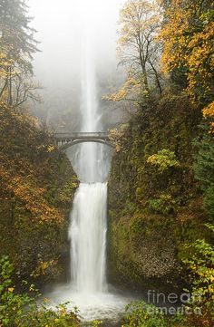 Multnomah Autumn Mist Photograph by Mike Dawson