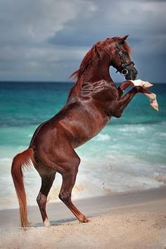 Pretty horse rearing at the beach, look at that water!