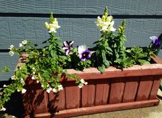 Haley's Flowers murphyfrog Susan's garden container garden
