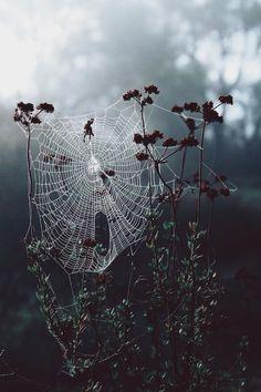 Spider | Pinterest: heymercedes
