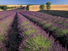Gorgeous, I can bring Provence home.