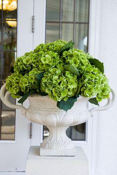 Bright green hydrangea in white stone urns