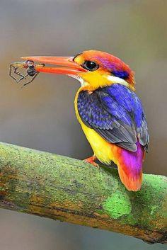 Magnificent Colored Kingfischer Izismile