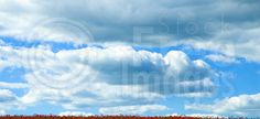 Free Poppy Field Royalty Free Stock Images - 239949