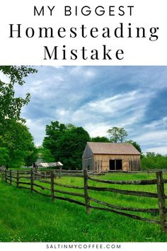 Here's the ONE biggest homesteading mistake that most new homesteaders make, and I made it too! Learn what I got right when I first started homesteading, but more importantly, what I did wrong. Here's how I'd avoid the single biggest mistake that I, and most other new homesteaders, make when we first got land and started homesteading. What To Feed Ducks, Keeping Ducks, Backyard Ducks, Raising Ducks, Duck House, Coffee Blog, Urban Homesteading, Natural Parenting, Small Farm