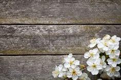Primavera de fondo con flores de cerezo en la mesa de madera Vista superior Foto…