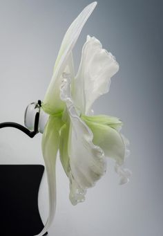 Jason Gamrath makes huge sculptures of orchids and other plants in glass.