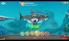 The shark that hunts in shallow water, Bull shark from hungry shark world.