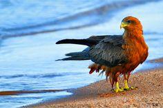 beautiful animal pictures wallpaper   Bird on beach picture beautiful animals HD Wallpaper