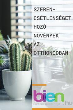 Kertészkedés- kattints a linkre és olvasd el a teljes cikket Cactus Plants, Cacti, Cactus