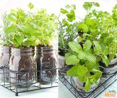 Reutilize vidros para cultivo de hortaliças. Lembre-se de não deixar em locais com muita iluminação ou sol direto. A rega deve ser feita de forma moderada :D