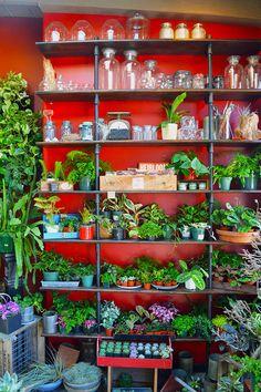 Crimson Horticultural Rarities in Temescal Alley, Oakland //