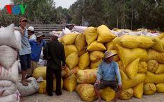 Nhiều nông dân chưa vui với chủ trương mua lúa tạm trữ | TIN TỨC NÔNG NGHIỆP