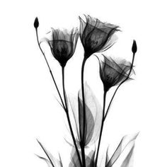 x-ray flower. black and white tattoo idea.