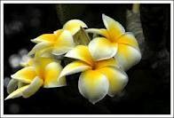 Hawaii I so love you!!!!!!