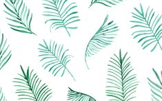 Pretty Palm leaves spruce up your desktop!                                                                                                                                                     More