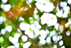 """Reference Pack: 100 photos of Abstract Bokeh Vol 1 by Nomad. Get transported by the light passing between and through the leaves, also called as the infamous """"subsurface scattering"""". I shot these photos at the beginning of fall, that is why you have some hints of orange-brown colors. I love the dreamy effects produced by the blur, the lighting and the contrast.    Ideal for:  Concept art / Matte painting / Photobashing  Viewport background / lighting for 3D scenes"""