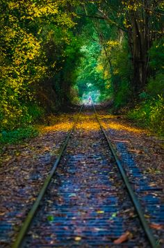 Green tunnel, Santa Cruz Area, California