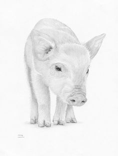 PIGLET PIG Limited Edition art drawing print by ArcadiaPortraits