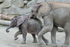 Iqhwa (7 month) and Tuluba (2 years) have fun, Zoo Vienna