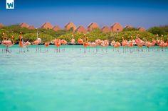 Flamingos on Bonaire Beach, Bonaire, Netherlands Antilles #LIFECommunity #Favorites From Pin Board #10
