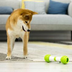 Myquentics is the Smart Toy provider for Cat fuck online store. Baby Chihuahua, Electric Shock, Dog Bones, Good Customer Service, Pet Life, Go Outside, Pet Toys, Your Pet, Corgi
