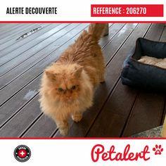 Cette Alerte (206270) est désormais close : elle n'est donc plus visible sur la plate-forme Petalert Suisse. L'animal a pu être remis à son propriétaire Merci pour votre aide. Visible, Aide, Cats, Switzerland, Thanks, Shape, Dog, Animaux, Gatos