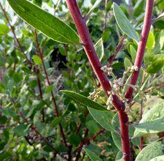 danger garden: The first Bloomday of 2013…