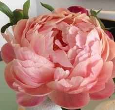 Archives for November 2013 | Flirty Fleurs The Florist Blog ...