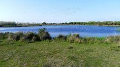 Los insecticidas llegan a las aves de Doñana